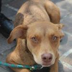 Inculcan a celayenses a adoptar perros #FOTOS